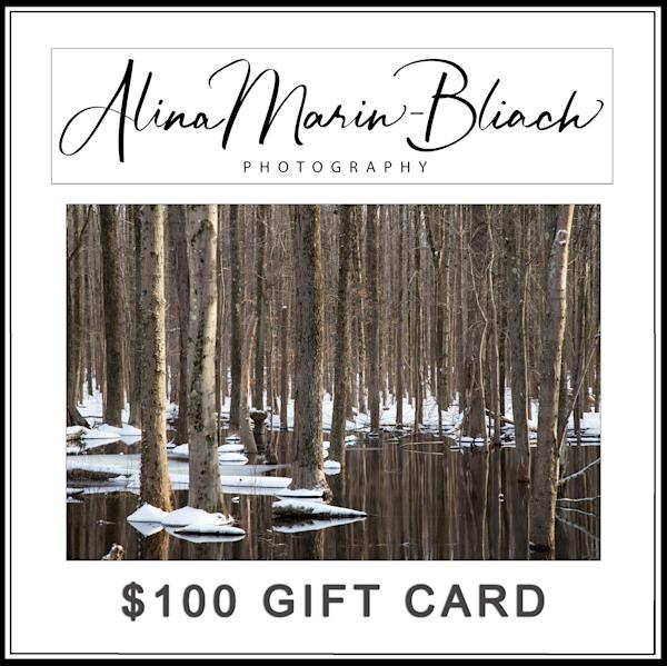 $100 Gift Card   Alina Marin-Bliach Photography/alinabstudios LLC