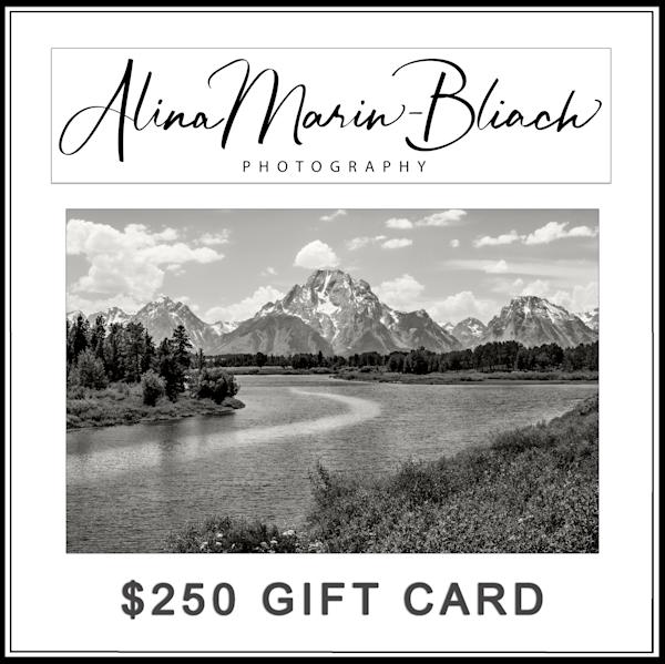 $250 Gift Card   Alina Marin-Bliach Photography/alinabstudios LLC