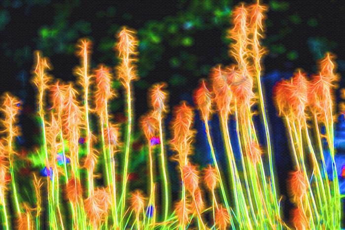 Orange Flower Glow
