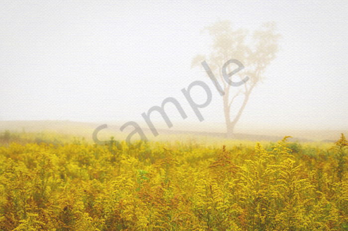 Dreams of Goldenrod and Fog Landscape Photo Wall Art by Landscape Photographer Melissa Fague