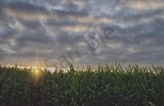Rows of Corn Landscape Photo Wall Art by Landscape Photographer Melissa Fague