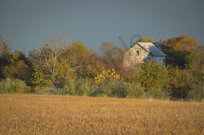 Abandoned Barn In The Trees Landscape Photo Wall Art by Landscape Photographer Melissa Fague