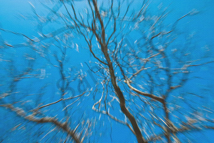 Streaking Tree Abstract Photography by Landscape and Nature Photographer Melissa Fague