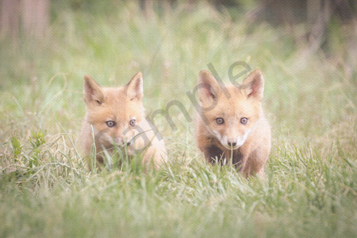 Learning to Hunt Wildlife Photography Wall Art Print Wall Art by Nature Photographer Melissa Fague