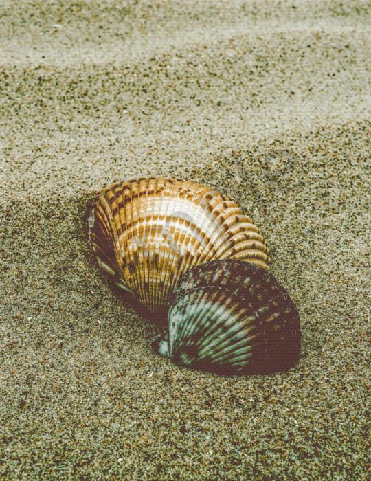 Dreamy Beach Sea Shells Colorized Nature Photo Wall Art by Nature Photographer Melissa Fague