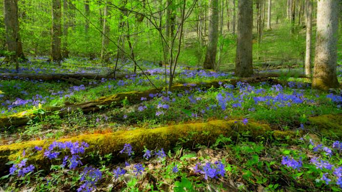 Forest Ephemerals