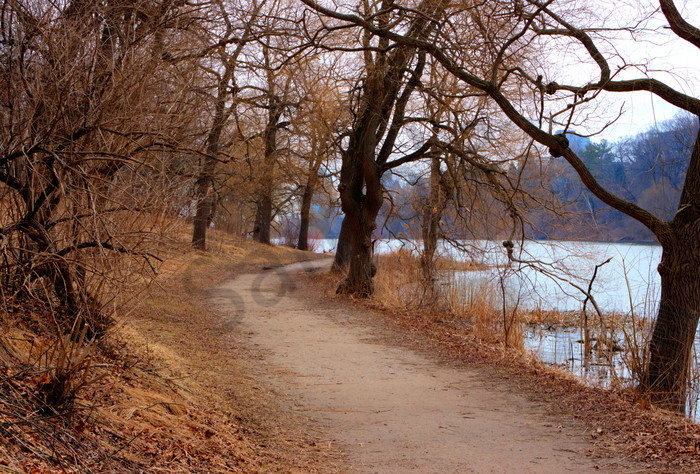 Trees by Grenadier Pond in Spring, High Park