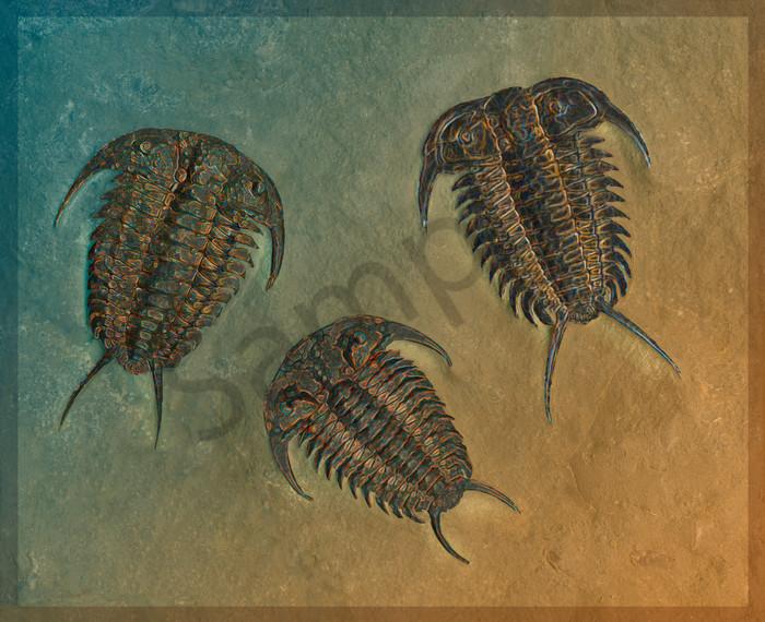 Ceraurus and Leviceraurus Fossil Trilobites
