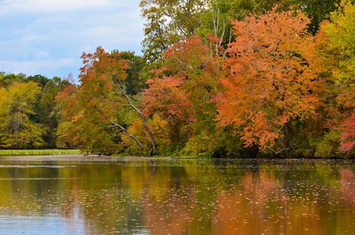 Autumn Treeline Landscape Photo Wall Art by Landscape Photographer Melissa Fague