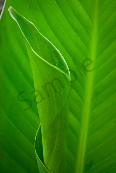 Leaves Canna Lily Nature Photo Wall Art by Nature Photographer Melissa Fague