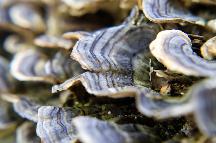 Mushrooms on Log Nature Photo Wall Art by Nature Photographer Melissa Fague