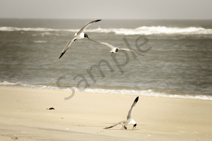 Life at the Shore Wildlife Photo Wall Art by Nature Photographer Melissa Fague