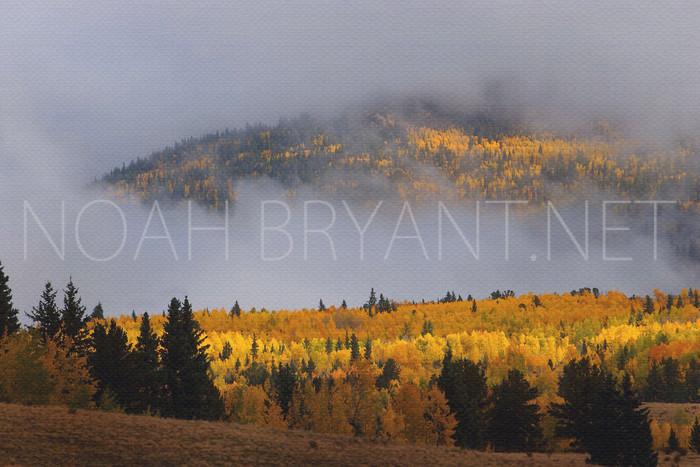 Cripple Creek Aspens - Noah Bryant