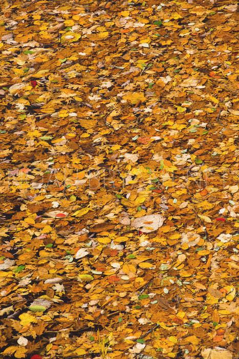 Autumn Leaves - Nopah Bryant