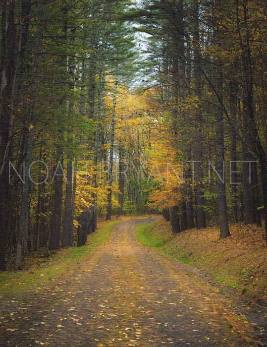 Autumn Road - Noah Bryant