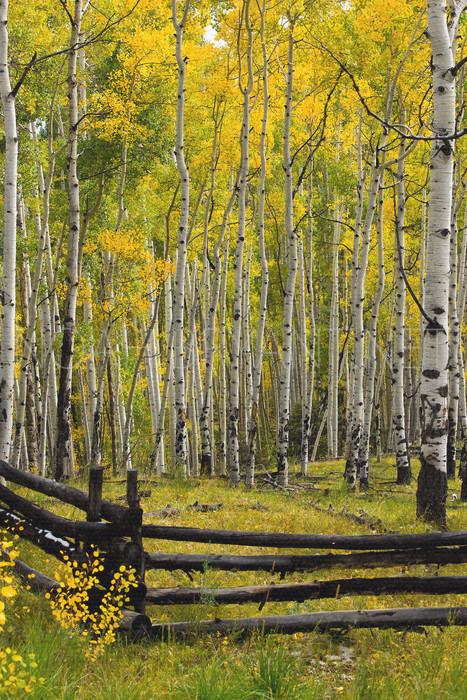 Telluride Fence - Noah Bryant