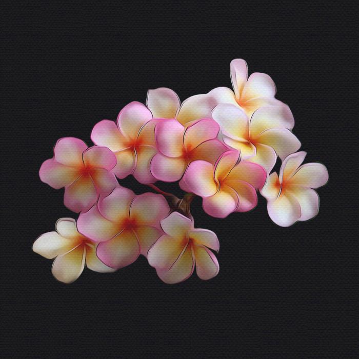 Plumeria Bloom in the Spring
