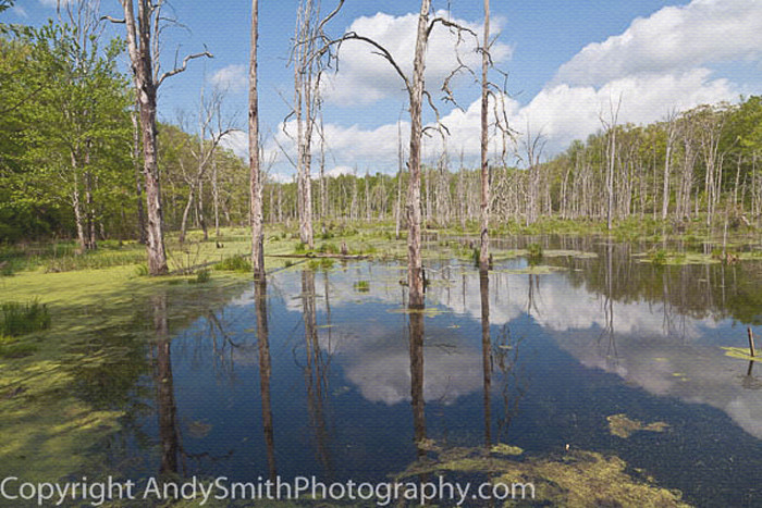 Northwest NJ, swamp, Peter's Valley, fine art photograph