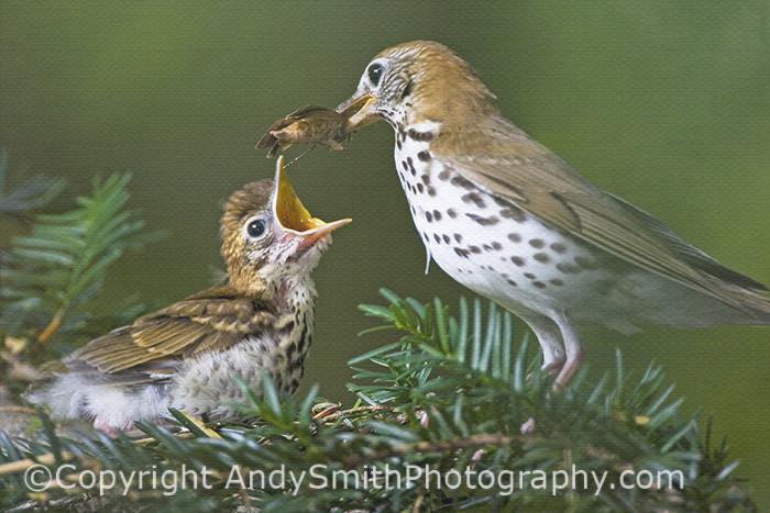 Fine Art photograph of Feeding the Fledgling