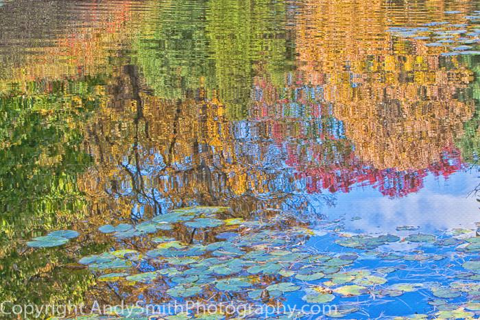 fine art photograph of Fall Reflection at Jenkins Arboretum
