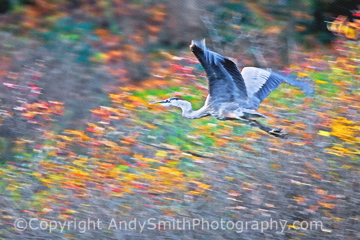 Great Blue Heron Blur fine art photograph