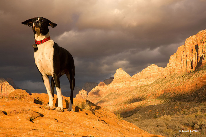 Zion Dog