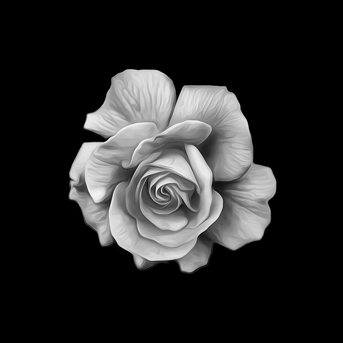 Black and White Rose Blossom