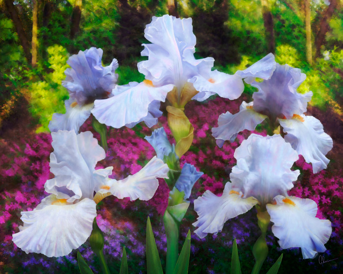 The Dance in the Garden, a painting of irises inspired by Matisse, by Mary Ahern the Artist,.