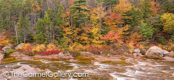 Autumn along the Swift River