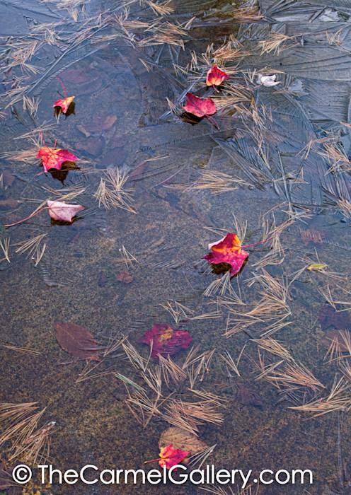 Autumn Freeze