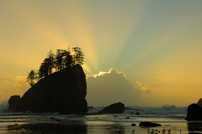 Second Beach at La Push Photograph for Sale as Fine Art.