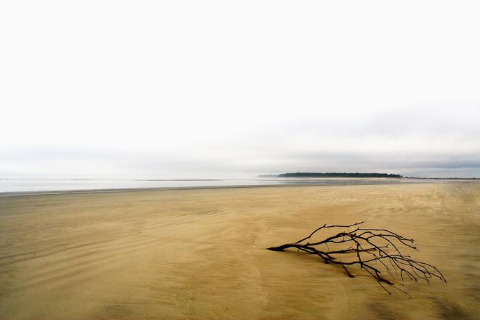 drift tree beach art print