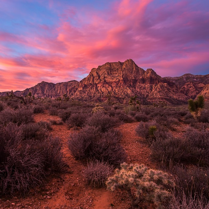 Pink Sunrise in Red Rock Canyon