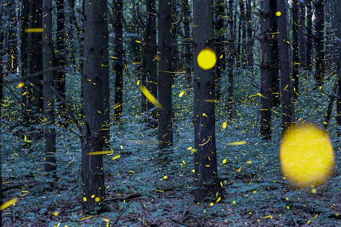 Fireflies of Woldumar