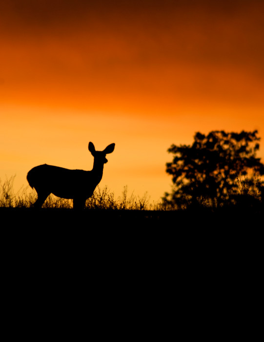 Morning Doe | Fine art photograph by Wayne Stadler