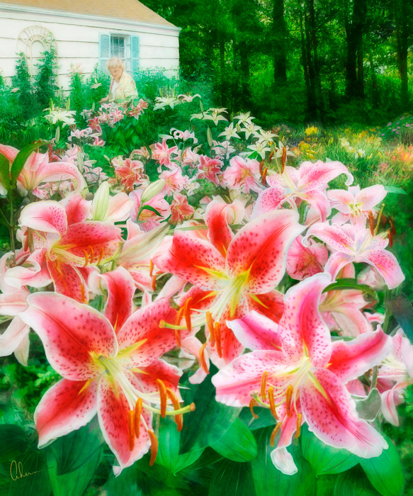 Mary's Dream Garden, a painting of daylillies by Mary Ahern the Artist.