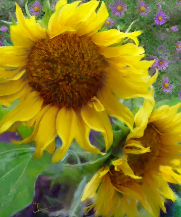 Sunflowers with Purple Asters art by Mary Ahern the artist.