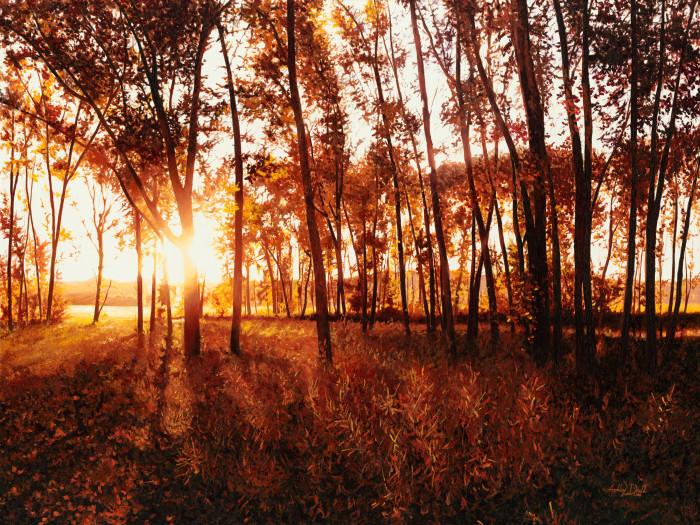 128102_trees_20mb_i8tdjp