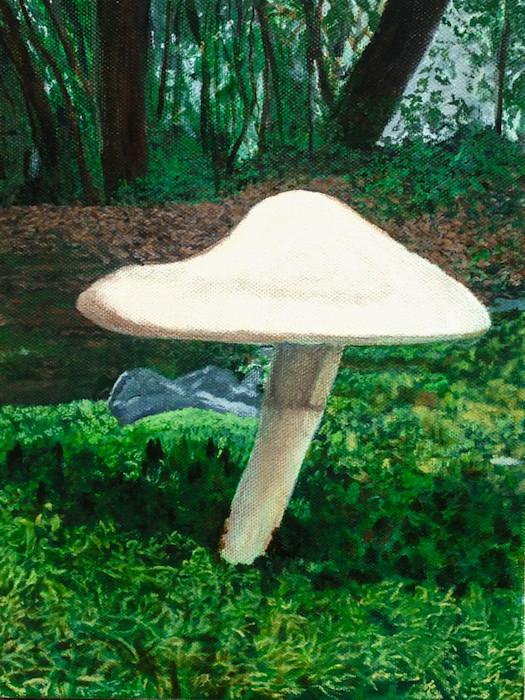 Cabin_mushroom_1_of_1_fgbb4h