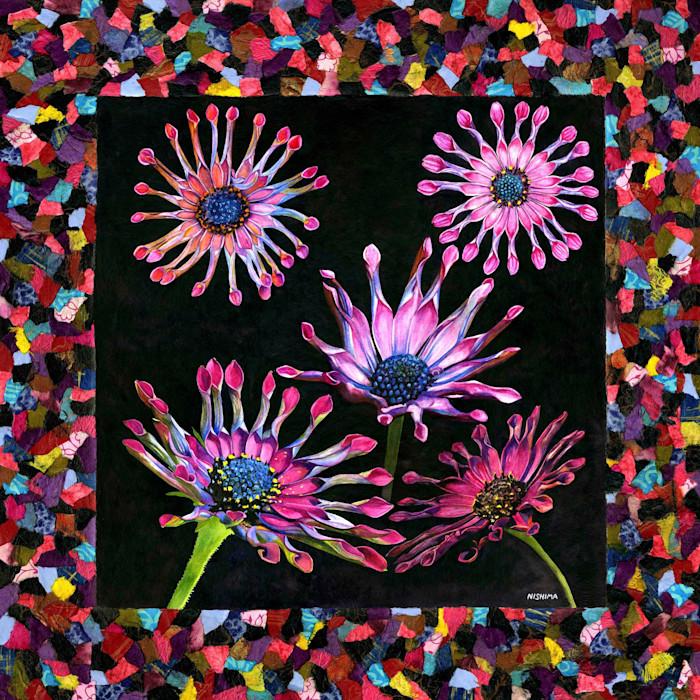 African_daisy.small_vp2o2z