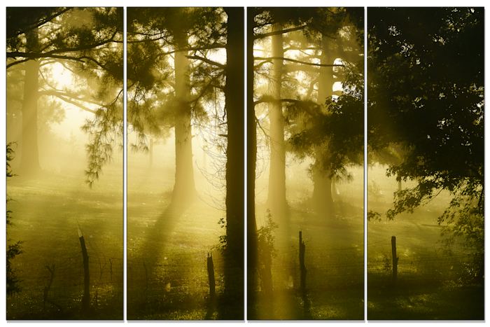 Foggy-tree_oi9lox