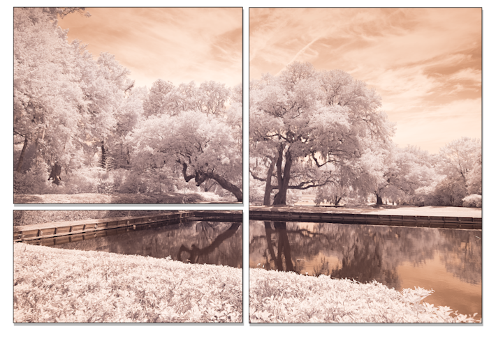 Ir-color-tree_lrgrmo