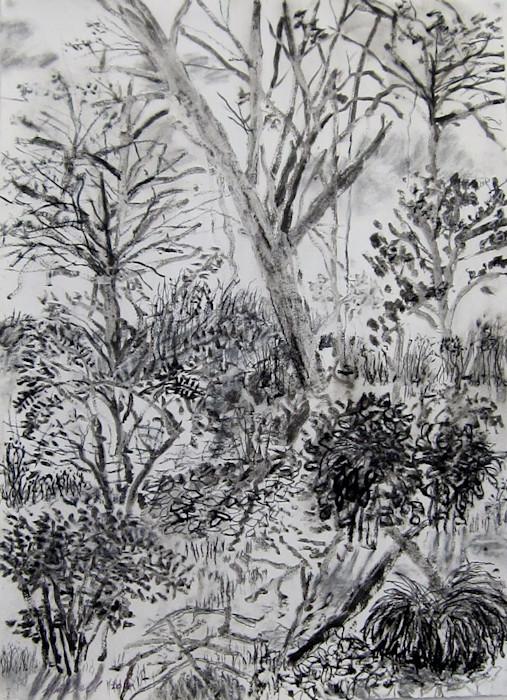 My_backyard_series8_ink_charcoal_drawing_bxpzcl