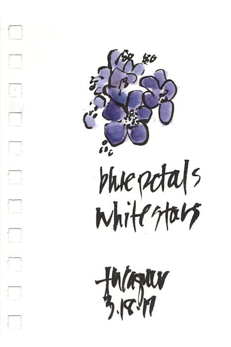 Blue_petals_white_petals_zub8x6