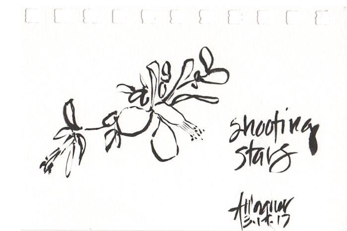Shooting_stars_xhbi96
