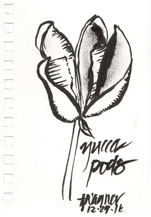 Yucca_pods_rwe19a