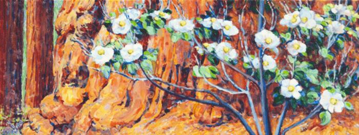 Giant-sequoias_-dogwood-blossoms-_-deer_p0rmdq