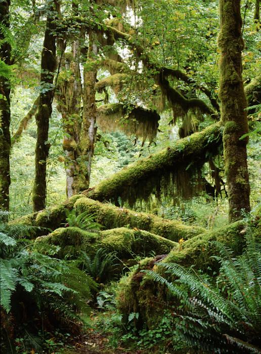 Rainforest_2_ra2bth