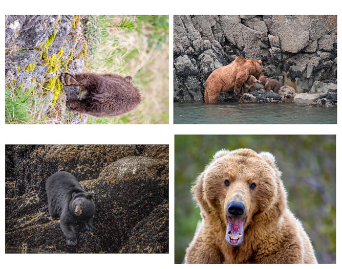 Folio_bears_utybzp