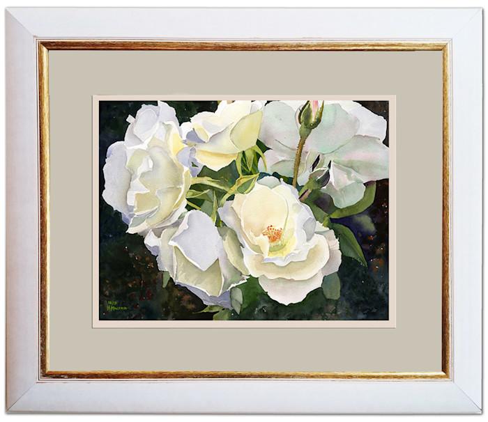 Boston_roses_asf_framed_uwezk6